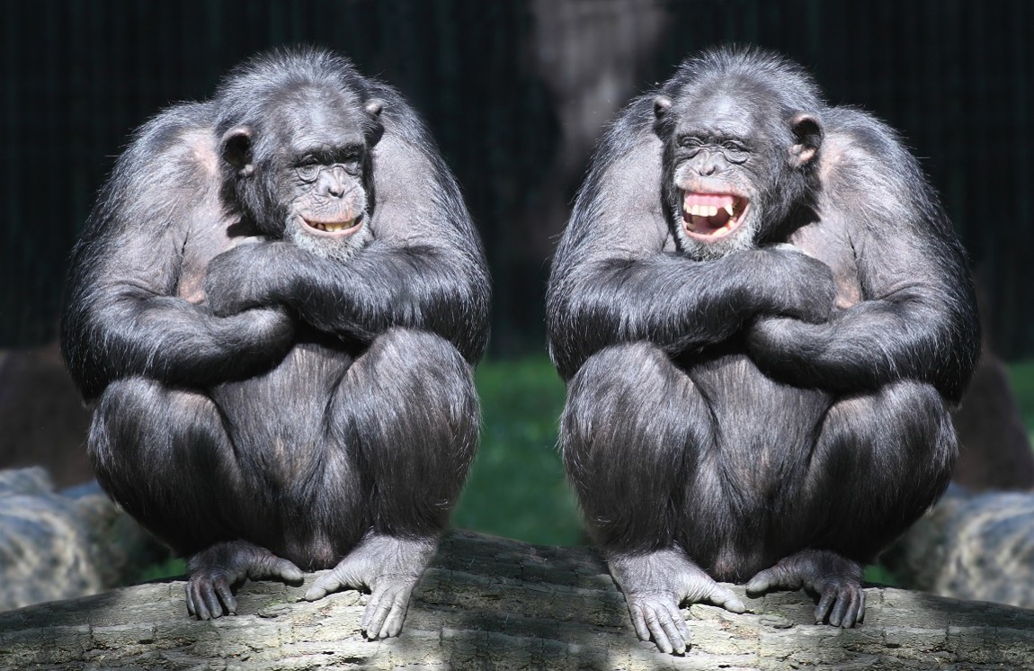 SVM versus a monkey. Make your bets.
